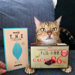 明治 チョコレート効果カカオ86%BOX ×5個 | 明治(チョコスナック、チョコバー)を使ったクチコミ「朝ごはんを食べない私は 毎朝、高カカオの…」(1枚目)