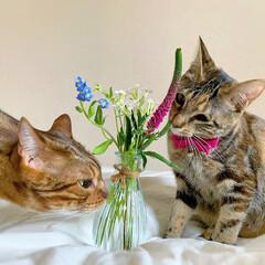猫/ペット仲間募集/フォロー大歓迎/小動物/フェレット/ペット/... 【PR】  Bloomee LIFE 公…(6枚目)