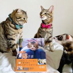 """雑誌/フェレット/小動物/エキゾチックアニマル/保護猫/子猫/... """"うちのお猫さま"""" 写真集に少し掲載して…(6枚目)"""