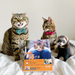"""雑誌/フェレット/小動物/エキゾチックアニマル/保護猫/子猫/... """"うちのお猫さま"""" 写真集に少し掲載して…(8枚目)"""