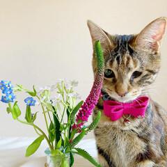 猫/ペット仲間募集/フォロー大歓迎/小動物/フェレット/ペット/... 【PR】  Bloomee LIFE 公…(4枚目)