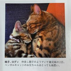 アメリカンショートヘア/anan/にゃんこLove/保護猫/ねこ/猫/... 似てるようで みんな違う😸😸😸🐻😸🐻  …(4枚目)