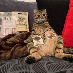グリニーズ 猫用 ローストチキン味 156g マース オーラルケア 歯磨き キャットフード ペットフード キャット(おやつ)を使ったクチコミ「PEPPY.さんから スタッフ厳選うまう…」(5枚目)