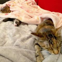 保護猫/エキゾチックアニマル/小動物/フェレット/平成最後の一枚/春のフォト投稿キャンペーン/... 双子のような 小さなくまちゃん兄弟🐻❤️…(7枚目)