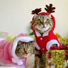コスプレ/クリスマス雑貨/クリスマスツリー/トナカイ/サンタクロース/サンタコス/... 友子ちゃんとも、クリスマス撮影してたら、…(6枚目)