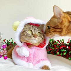 小悪魔/ねこ/ベンガル猫/ベンガルキャット/ベンガル/スコティッシュ/... ともにゃんは、可愛いピンクのトナカイさん…