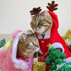 コスプレ/クリスマス雑貨/クリスマスツリー/トナカイ/サンタクロース/サンタコス/... 友子ちゃんとも、クリスマス撮影してたら、…