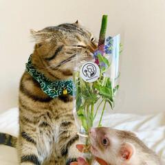 猫/ペット仲間募集/フォロー大歓迎/小動物/フェレット/ペット/... 【PR】  Bloomee LIFE 公…(7枚目)