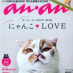 アメリカンショートヘア/anan/にゃんこLove/保護猫/ねこ/猫/... 似てるようで みんな違う😸😸😸🐻😸🐻  …(2枚目)