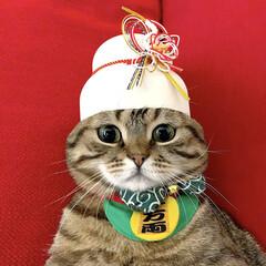 招き猫/ねこ/スコティッシュフォールド/スコティッシュ/猫部/しめ縄/... 平成最後の大晦日🍜🌅🗻🏯👘😻💕 チミも楽…