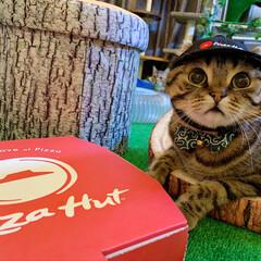 ホワイトデー/出前/ねこ/猫/バイト/小動物/... 今日はピザハットに バイトに行ってたにゃ…