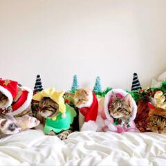 ペットと暮らす家「house-zoo」/リミアペット同好会/リミアペット/アメリカンショートヘア/スコティッシュフォールド/ベンガル/... 💕🎁🎄 MerryX'mas 🎄🎁💕 記…(6枚目)