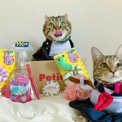 ペティオ ハッピークリーン 猫トイレのニオイ消臭&除菌 / ペティオ(ペット用)を使ったクチコミ「LIMIAさんから、ステキなpetio詰…」