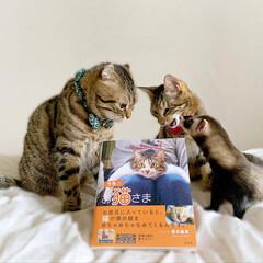 """雑誌/フェレット/小動物/エキゾチックアニマル/保護猫/子猫/... """"うちのお猫さま"""" 写真集に少し掲載して…(9枚目)"""