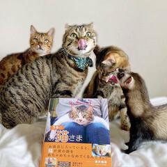 """雑誌/フェレット/小動物/エキゾチックアニマル/保護猫/子猫/... """"うちのお猫さま"""" 写真集に少し掲載して…(3枚目)"""