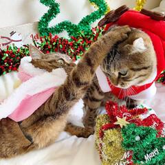 コスプレ/クリスマス雑貨/クリスマスツリー/トナカイ/サンタクロース/サンタコス/... 友子ちゃんとも、クリスマス撮影してたら、…(8枚目)