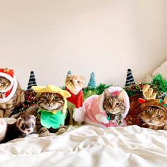 ペットと暮らす家「house-zoo」/リミアペット同好会/リミアペット/アメリカンショートヘア/スコティッシュフォールド/ベンガル/... 💕🎁🎄 MerryX'mas 🎄🎁💕 記…(3枚目)