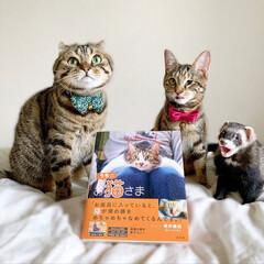 """雑誌/フェレット/小動物/エキゾチックアニマル/保護猫/子猫/... """"うちのお猫さま"""" 写真集に少し掲載して…(4枚目)"""