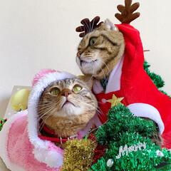 コスプレ/クリスマス雑貨/クリスマスツリー/トナカイ/サンタクロース/サンタコス/... 友子ちゃんとも、クリスマス撮影してたら、…(2枚目)