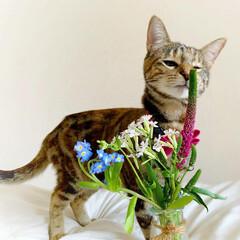 猫/ペット仲間募集/フォロー大歓迎/小動物/フェレット/ペット/... 【PR】  Bloomee LIFE 公…(5枚目)
