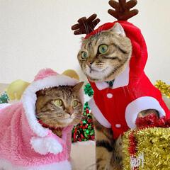 コスプレ/クリスマス雑貨/クリスマスツリー/トナカイ/サンタクロース/サンタコス/... 友子ちゃんとも、クリスマス撮影してたら、…(7枚目)