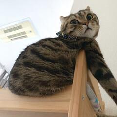 子猫/アメショ/アメリカンショートヘア/保護猫/小動物/フェレット/... みんなで集合にゃう~😸😸🐻 今日は、何を…(3枚目)