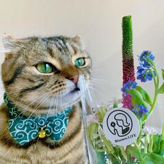 猫/ペット仲間募集/フォロー大歓迎/小動物/フェレット/ペット/... 【PR】  Bloomee LIFE 公…(8枚目)