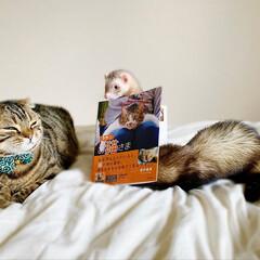 """雑誌/フェレット/小動物/エキゾチックアニマル/保護猫/子猫/... """"うちのお猫さま"""" 写真集に少し掲載して…(10枚目)"""