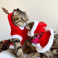 ふわもこ部/ネコ/ねこ/兄妹/仔猫/サンタコス/... 妹のももたんにチュッ😽💕 てされて、でへ…