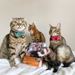 """雑誌/フェレット/小動物/エキゾチックアニマル/保護猫/子猫/... """"うちのお猫さま"""" 写真集に少し掲載して…(2枚目)"""