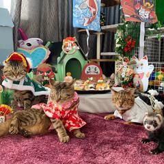 小動物/フェレット/子猫/ベンガル/スコティッシュフォールド/多頭飼い/... 家族写真😸😸😸🐻😸💕💕💕💕💕 ももちゃん…