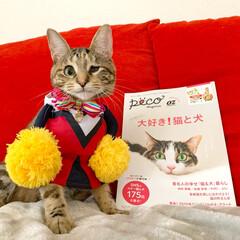 小動物/フェレット/アニマルfamily/OZ magazine/OZマガジン/PECO/... PECO OZ magazine にちょ…