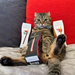 招き猫/お菓子/おやつ/バトンドール/ポッキー/LIMIAペット同好会/... おやつの時間を お知らせしますにゃ~ん😻…(2枚目)