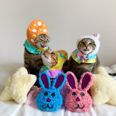 子猫/アメショ/保護猫/スコティッシュ/ベンガル/イースターディスプレイ/... みんなでワイワイ🥳🥳🥳 イースターパーテ…(4枚目)