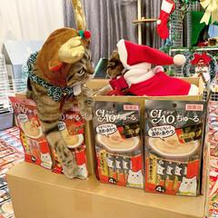プレゼント/トナカイ/お菓子/ちゅーる/サンタクロース/アメリカンショートヘア/... ぼく達が、にゃんこのみんなに ちゅーるを…(9枚目)