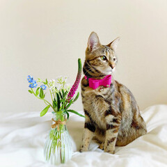 猫/ペット仲間募集/フォロー大歓迎/小動物/フェレット/ペット/... 【PR】  Bloomee LIFE 公…(2枚目)