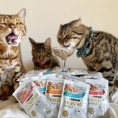 モンプチ プチグルメ ツナとビーフ 50gx6袋(その他ペット用品、生き物)を使ったクチコミ「昨日のおやつ会は モンプチでちょいリッチ…」(3枚目)