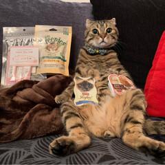 グリニーズ 猫用 ローストチキン味 156g マース オーラルケア 歯磨き キャットフード ペットフード キャット(おやつ)を使ったクチコミ「PEPPY.さんから スタッフ厳選うまう…」(6枚目)