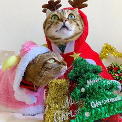 コスプレ/クリスマス雑貨/クリスマスツリー/トナカイ/サンタクロース/サンタコス/... 友子ちゃんとも、クリスマス撮影してたら、…(4枚目)