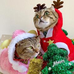 コスプレ/クリスマス雑貨/クリスマスツリー/トナカイ/サンタクロース/サンタコス/... 友子ちゃんとも、クリスマス撮影してたら、…(3枚目)