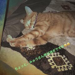 茶トラ/LIMIAペット同好会/フォロー大歓迎/ペット/ペット仲間募集/猫/...