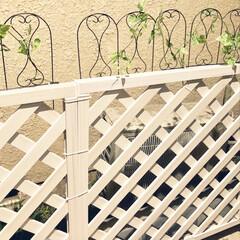 フェンスDIY/玄関あるある/節約/DIY/100均 庭のフェンスをDIY中