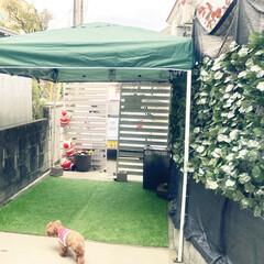 テント/タープ/雨よけ/日よけ/ドッグラン/ペット/... 庭のプチドッグランにタープテントを設置 …