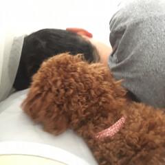 ベット/パパ/犬 パパが大好きすぎて一緒の枕で寝たいももち…