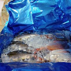 鰹/旬の魚/鯛/イサキ 土曜の朝、沢山の鮮魚が田舎から届きました…(1枚目)
