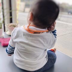 ブルーム 今治産 Fit-Use ベビースタイ 綿100% 日本製 3枚セット 今治fit-useスタイ_水玉3(その他ベビー、キッズ、マタニティ用品)を使ったクチコミ「耳に手あてて外見てる息子。6ヶ月なのにお…」