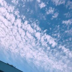 うろこ雲/空/フォロー大歓迎/秋  おはようございます☀️  いや~外寒い…