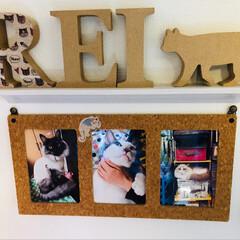 猫派/LIMIAペット同好会/にゃんこ同好会/至福のひととき/雑貨/ハンドメイド/... 100均のアイテムを色々使って壁に写真を…