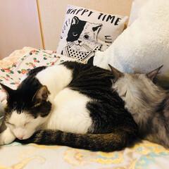 仲良し/お昼寝/猫/暮らし 仲良くお昼寝 ƶƵ