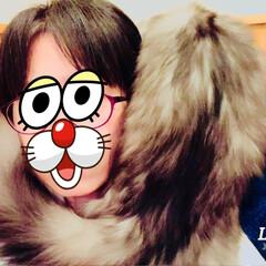 猫 今日も甘えん坊モードのサラっちょ💕 しっ…(3枚目)